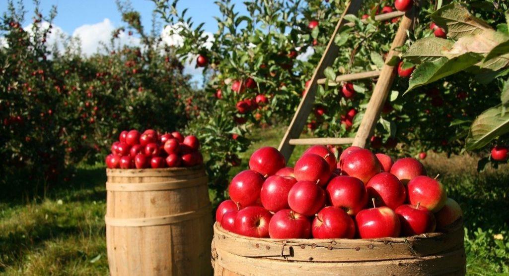 manzana para jugos detox